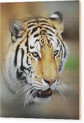 Wood Print featuring the photograph Tiger Eyes by Michael Peychich