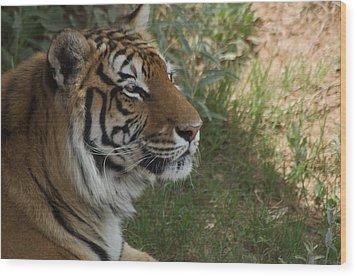 Tiger I Wood Print by Susan Heller
