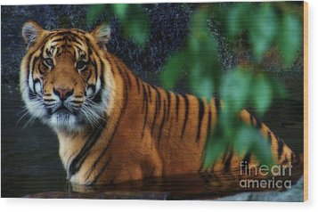 Tiger Land Wood Print