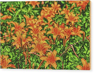 Tiger Lilies Wood Print by Pat Cook
