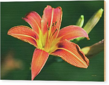 Wood Print featuring the photograph Tiger Lily by Christina Rollo