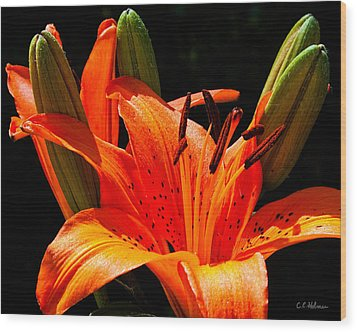 Tiger Lily Wood Print by Christopher Holmes