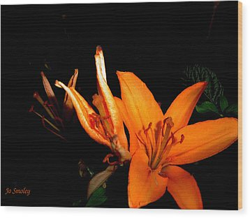 Tiger Lily Wood Print by Joanne Smoley