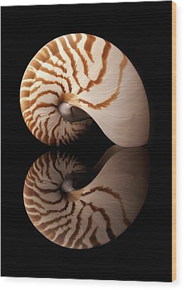 Wood Print featuring the photograph Tiger Nautilus Shell And Reflection by Jim Hughes