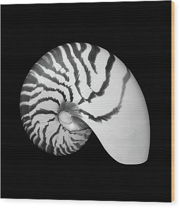 Wood Print featuring the photograph Tiger Nautilus Shell by Jim Hughes