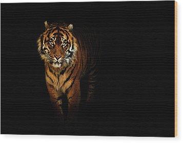 Tiger On A Black Background Wood Print