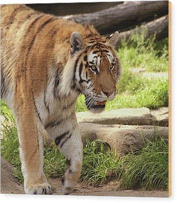 Tiger On The Hunt Wood Print by Gordon Dean II
