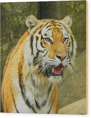 Wood Print featuring the photograph Tiger Stare by Sandi OReilly