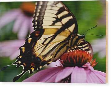 Tiger Swallowtail Butterfly On Coneflower Wood Print