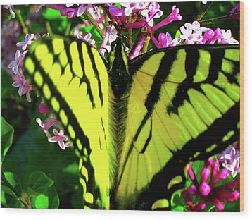 Wood Print featuring the photograph Tiger Swallowtail On Lilac by Randy Rosenberger