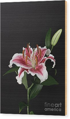 Tiger Woods Lily Wood Print