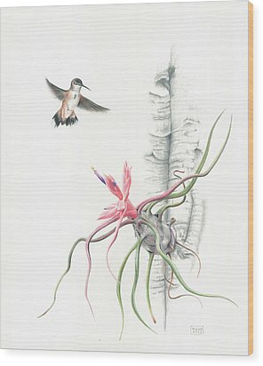 Tillandsia Bulbosa With Hummingbird Wood Print