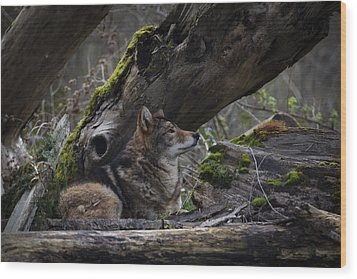 Timber Wolf Wood Print by Randy Hall