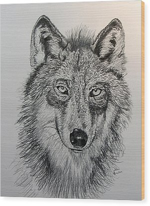 Timber Wolf Wood Print by Stan Hamilton