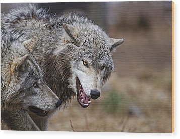 Wood Print featuring the photograph Timber Wolves by Michael Cummings