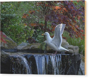Time For A Bird Bath Wood Print