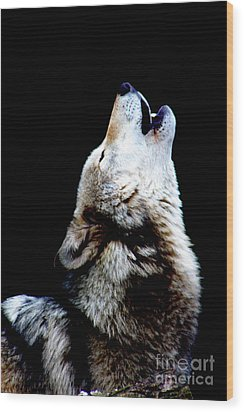 Time To Howl Wood Print by Nick Gustafson