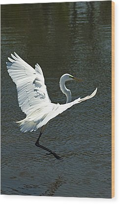 Time To Land Wood Print by Carolyn Marshall
