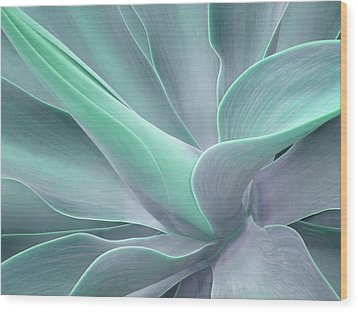 Tinted Agave Attenuata Abstract Wood Print