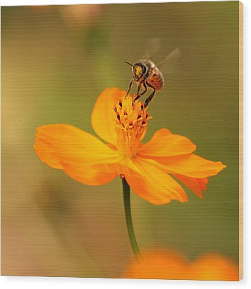 Tiny Dancer Wood Print by Marion Cullen