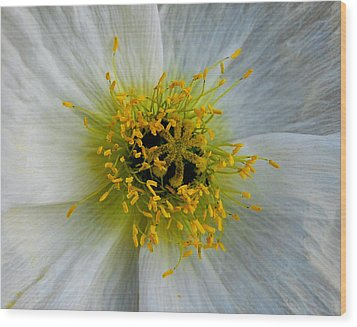 Wood Print featuring the photograph Tiny Explosion by Marilynne Bull