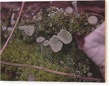 Tiny Mushrooms  Wood Print by Jeff Swan