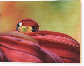 Tiny Water Drop Reflections Wood Print