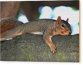 Tired Old Squirrel . R6622 Wood Print