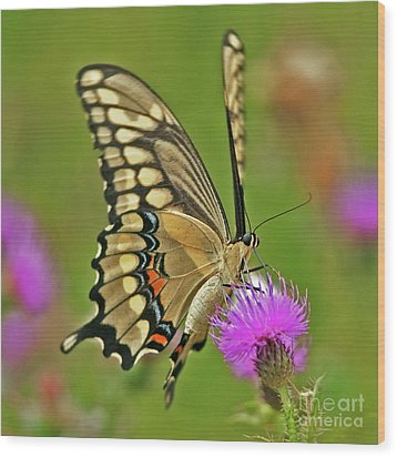 Titan On Wings... Wood Print by Nina Stavlund