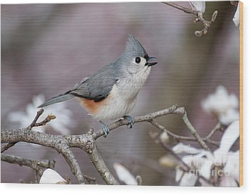 Wood Print featuring the photograph Titmouse Song - D010023 by Daniel Dempster