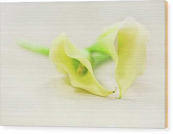 To Have And To Hold... Wood Print by Evelina Kremsdorf