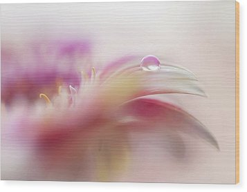 Wood Print featuring the photograph To Live In Dream 2. Macro Gerbera by Jenny Rainbow