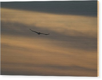 To Soar - Free Wood Print by Douglas Barnett