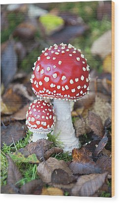 Toadstools In The Woods Vi Wood Print