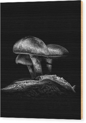 Toadstools On A Toronto Trail No 3 Wood Print