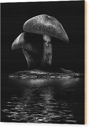 Wood Print featuring the photograph Toadstools On A Toronto Trail Reflection 6 by Brian Carson