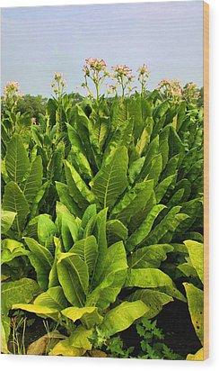 Tobacco Wood Print by Kristin Elmquist