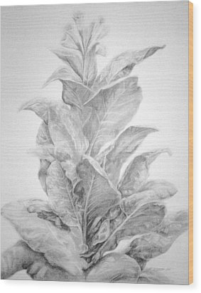 Tobacco  Wood Print by Meagan  Visser