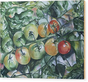 Tomatoes In Dad's Garden Wood Print