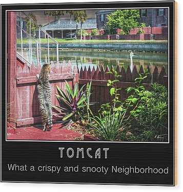 Wood Print featuring the photograph Tomcat Breakfast by Hanny Heim