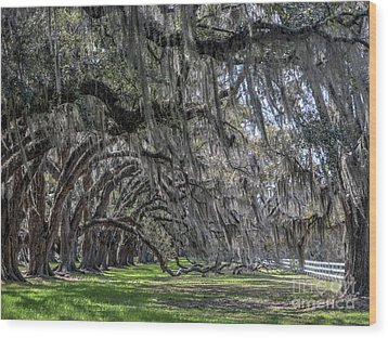 Tomotley Plantation Arches Wood Print by ELDavis Photography
