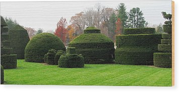 Topiary Garden Wood Print by Angela Davies