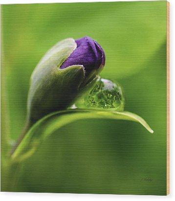 Topsy Turvy World In A Raindrop Wood Print by Jordan Blackstone