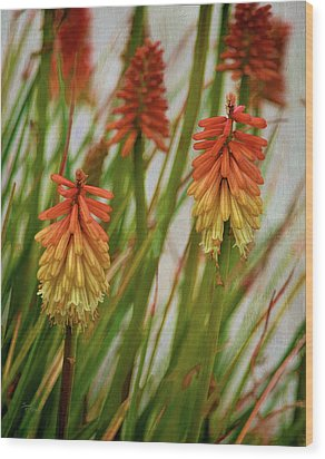 Torch Lily At The Beach Wood Print by Sandi OReilly