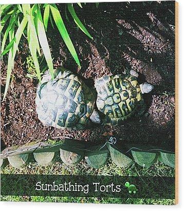 #tortoise #torts #sunbathing #garden Wood Print by Natalie Anne