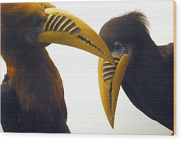 Toucan Play At That Game Wood Print by Jez C Self