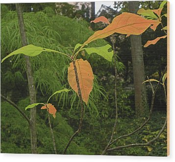 Wood Print featuring the photograph Touch Of Fall by Larry Bishop