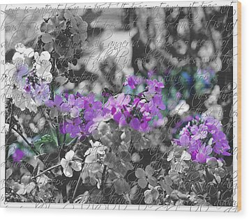 Touch Of Phlox Wood Print