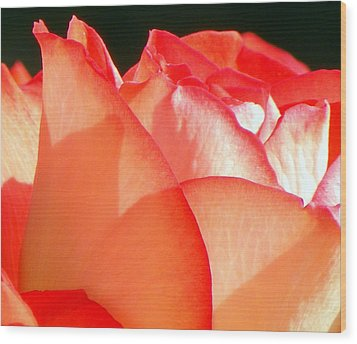 Touch Of Rose Wood Print by Karen Wiles