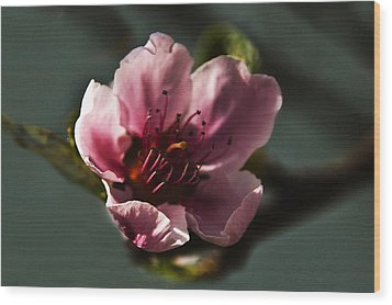 Wood Print featuring the photograph Touch Of Spring by Kathleen Stephens